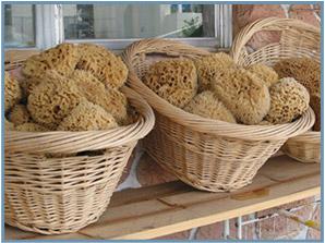 Aegean Sponge Company Wholesale Sea Sponges Natural